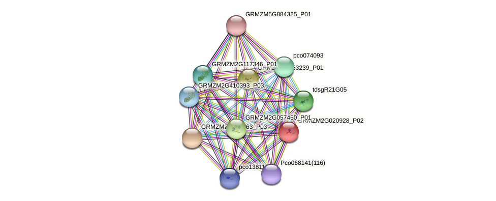 c3h53 protein (Zea mays) - STRING interaction network
