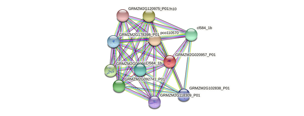 GRMZM2G020957_P01 protein (Zea mays) - STRING interaction network