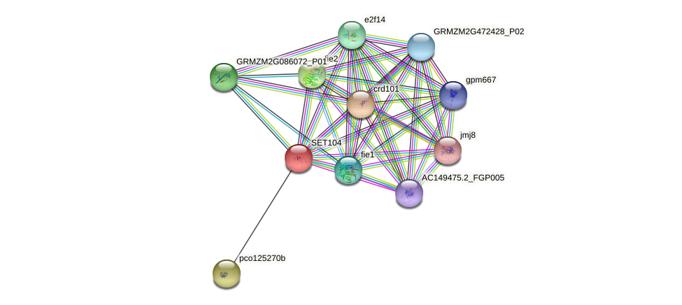 SET104 protein (Zea mays) - STRING interaction network