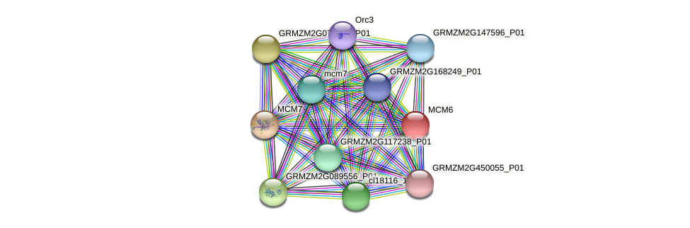 MCM6 protein (Zea mays) - STRING interaction network