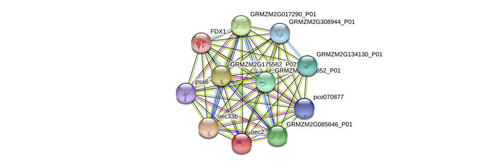 PSBQ1 protein (Zea mays) - STRING interaction network