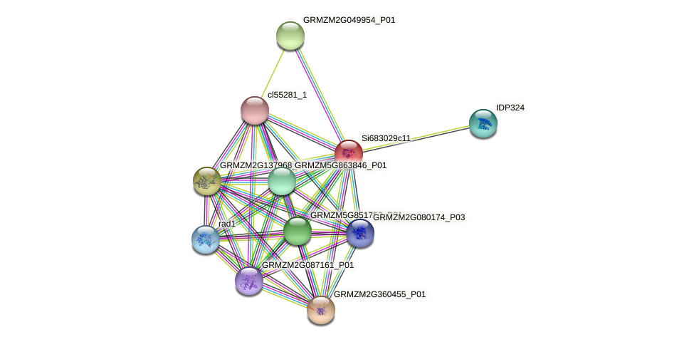 GRMZM2G021802_P01 protein (Zea mays) - STRING interaction network