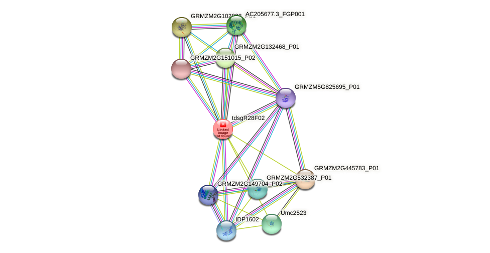 GRMZM2G021889_P01 protein (Zea mays) - STRING interaction network