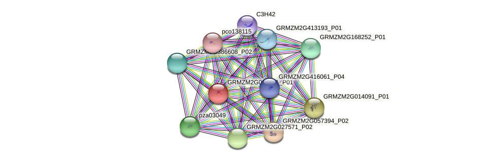 GRMZM2G022041_P01 protein (Zea mays) - STRING interaction network