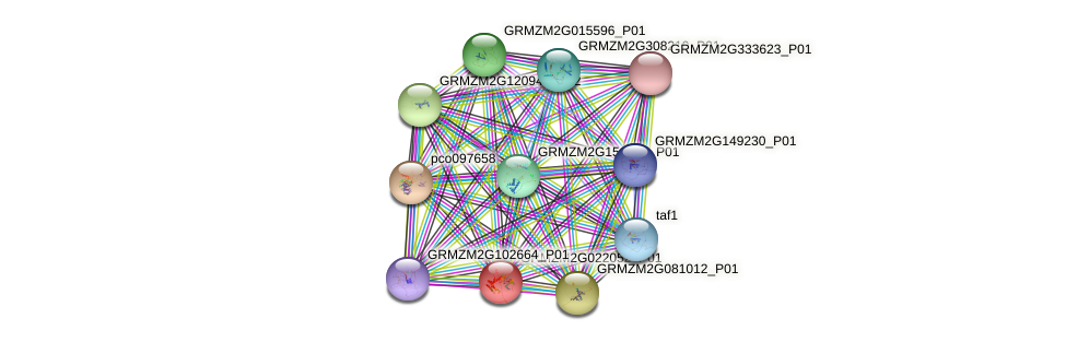 GRMZM2G022052_P01 protein (Zea mays) - STRING interaction network