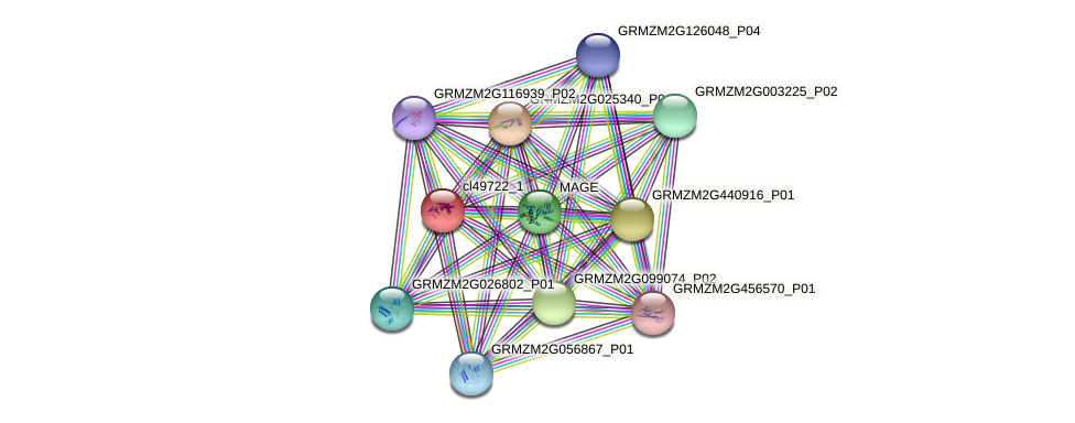cl49722_1 protein (Zea mays) - STRING interaction network