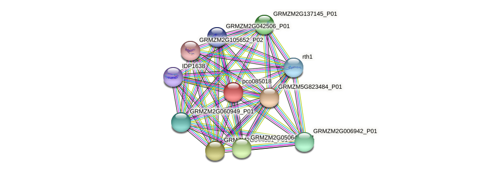 pco085018 protein (Zea mays) - STRING interaction network