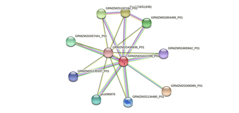 GRMZM2G022206_P02 protein (Zea mays) - STRING interaction network