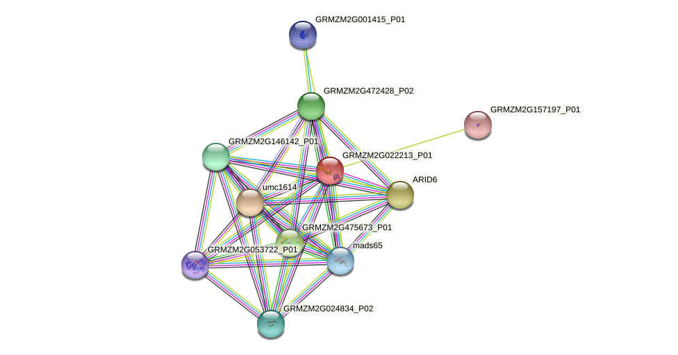GRMZM2G022213_P01 protein (Zea mays) - STRING interaction network