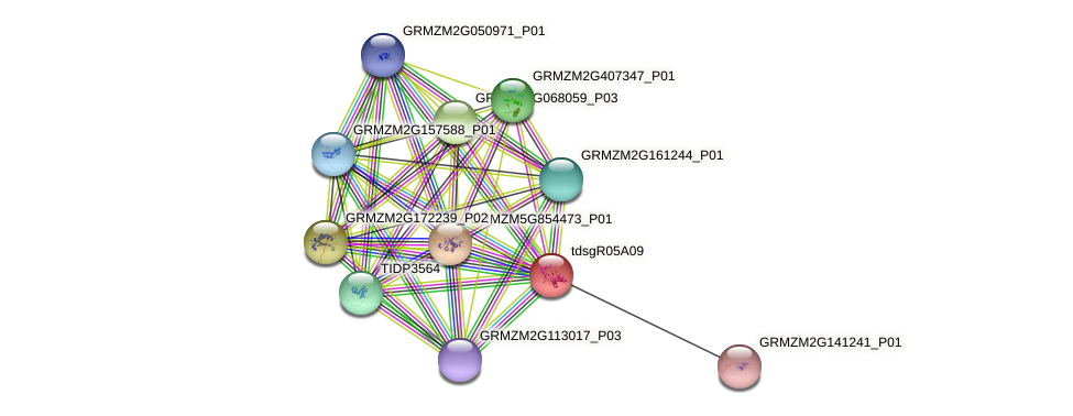 GRMZM2G022248_P01 protein (Zea mays) - STRING interaction network