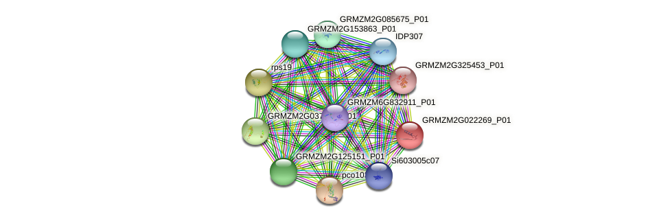GRMZM2G022269_P01 protein (Zea mays) - STRING interaction network