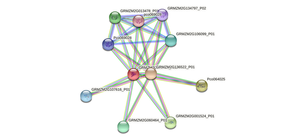 GRMZM2G022413_P01 protein (Zea mays) - STRING interaction network