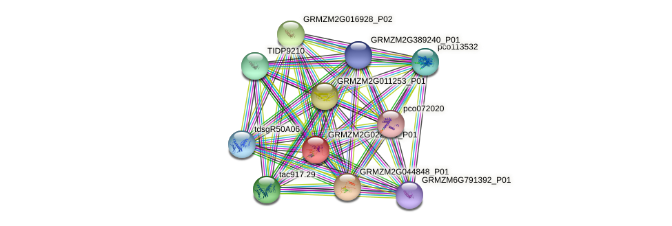 GRMZM2G022619_P01 protein (Zea mays) - STRING interaction network
