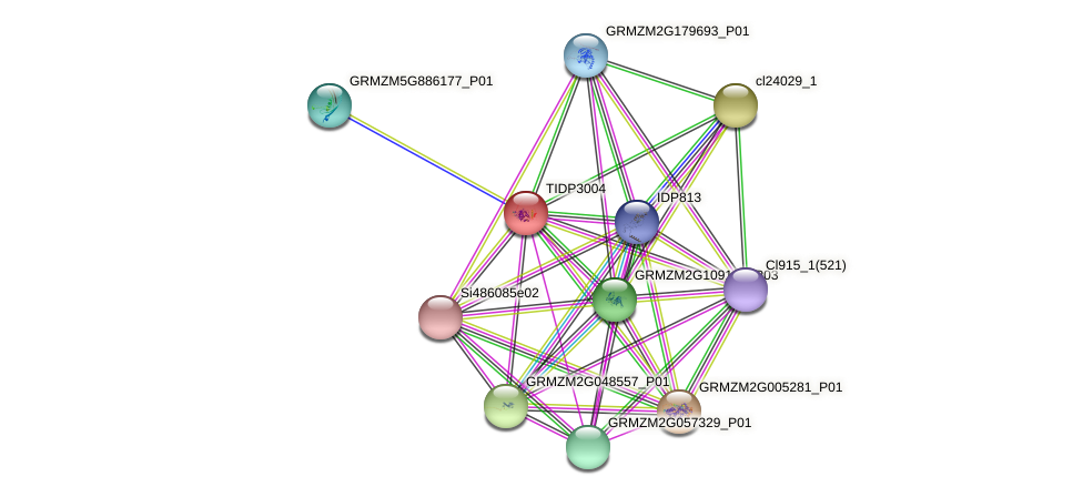 TIDP3004 protein (Zea mays) - STRING interaction network
