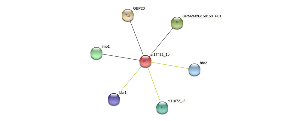 cl17432_1b protein (Zea mays) - STRING interaction network