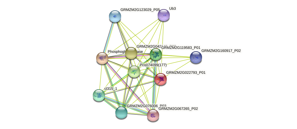 Zm.77978 protein (Zea mays) - STRING interaction network