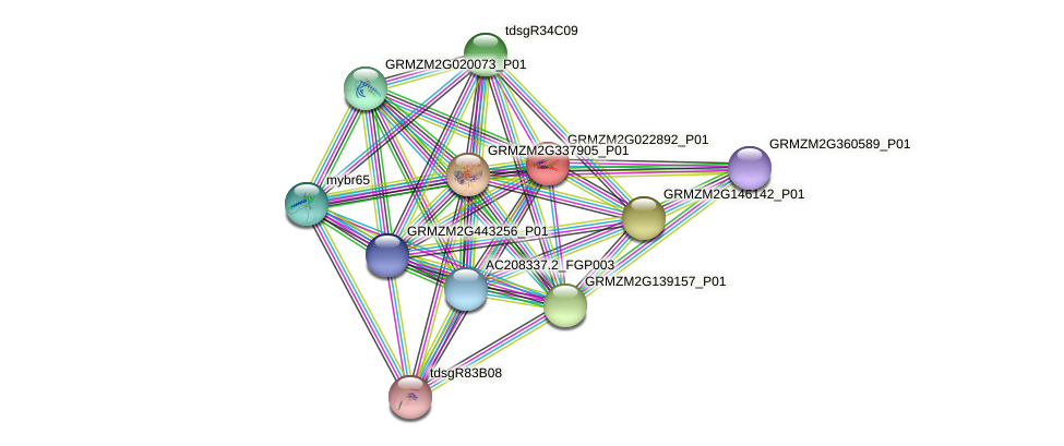 GRMZM2G022892_P01 protein (Zea mays) - STRING interaction network