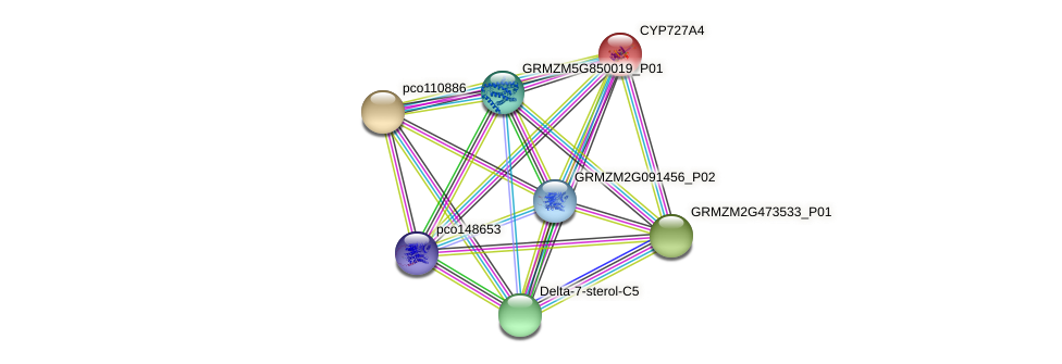 Zm.32806 protein (Zea mays) - STRING interaction network