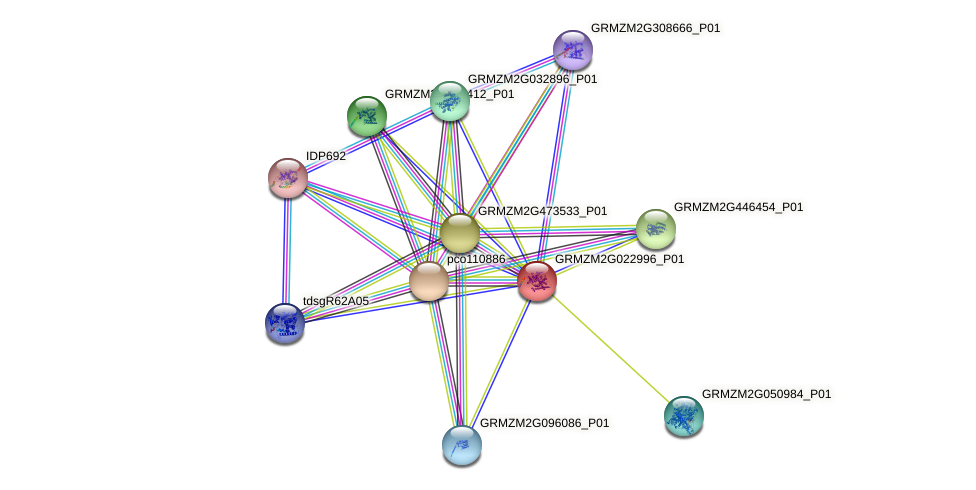 GRMZM2G022996_P01 protein (Zea mays) - STRING interaction network