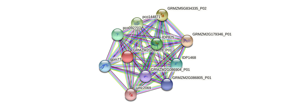 GRMZM2G023028_P01 protein (Zea mays) - STRING interaction network