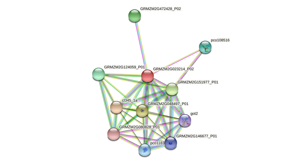 GRMZM2G023214_P02 protein (Zea mays) - STRING interaction network