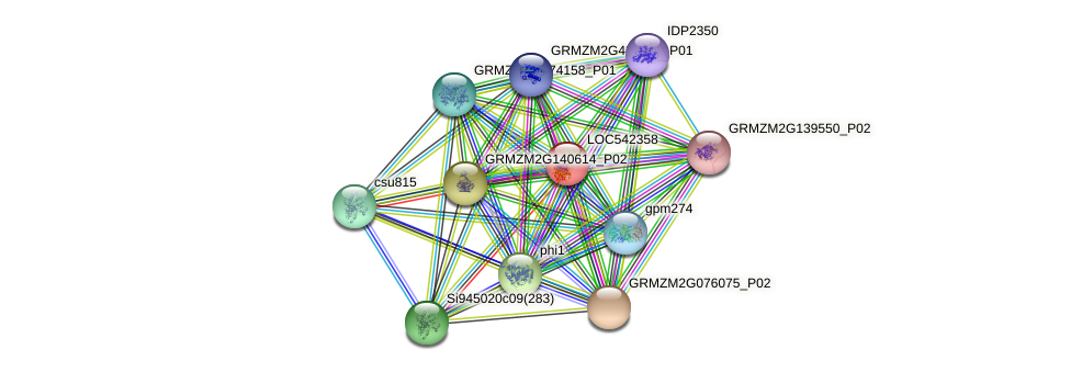 pgm1 protein (Zea mays) - STRING interaction network