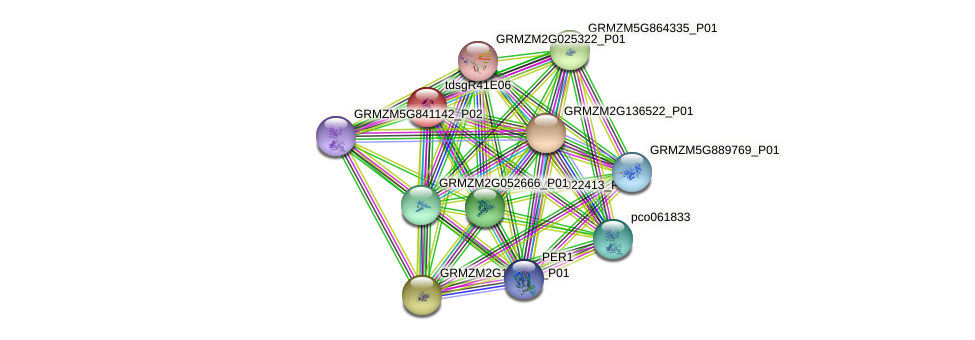 GRMZM2G023387_P01 protein (Zea mays) - STRING interaction network