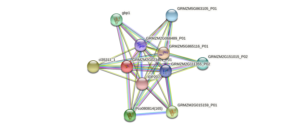 GRMZM2G023401_P01 protein (Zea mays) - STRING interaction network