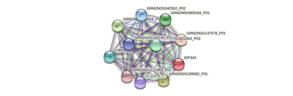 IDP343 protein (Zea mays) - STRING interaction network