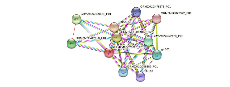 GRMZM2G023625_P01 protein (Zea mays) - STRING interaction network