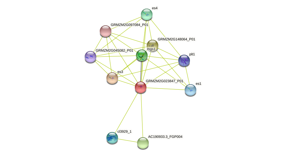 GRMZM2G023847_P01 protein (Zea mays) - STRING interaction network