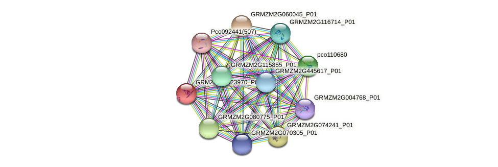 GRMZM2G023970_P01 protein (Zea mays) - STRING interaction network