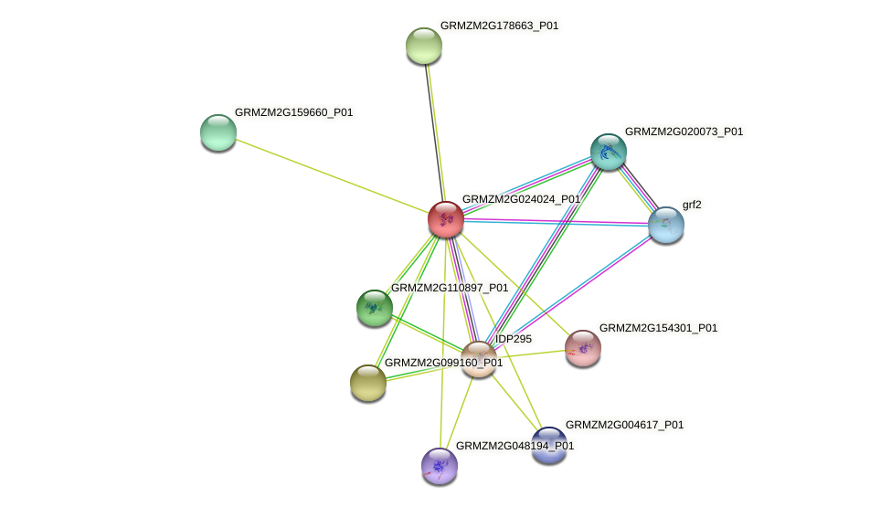 Zm.35912 protein (Zea mays) - STRING interaction network