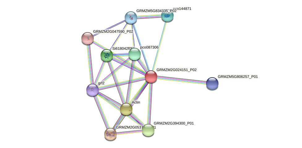 GRMZM2G024151_P02 protein (Zea mays) - STRING interaction network