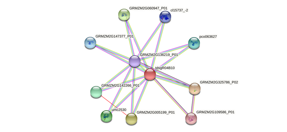 GRMZM2G024374_P01 protein (Zea mays) - STRING interaction network