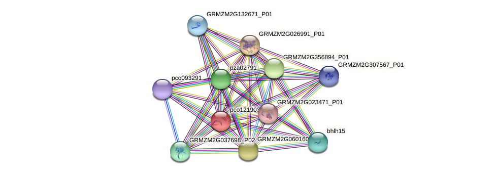 pco121903b protein (Zea mays) - STRING interaction network