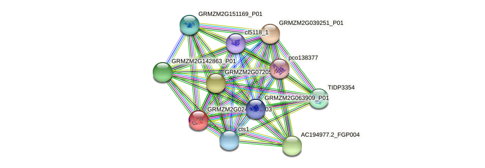 GRMZM2G024622_P03 protein (Zea mays) - STRING interaction network