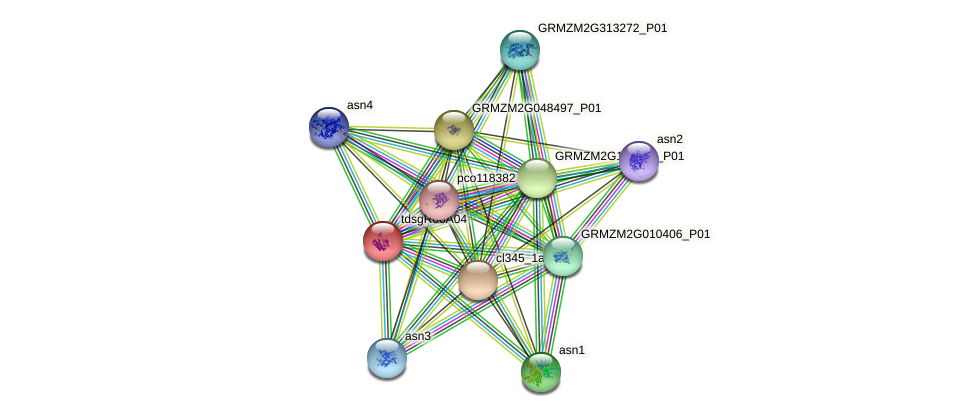 GRMZM2G024686_P01 protein (Zea mays) - STRING interaction network