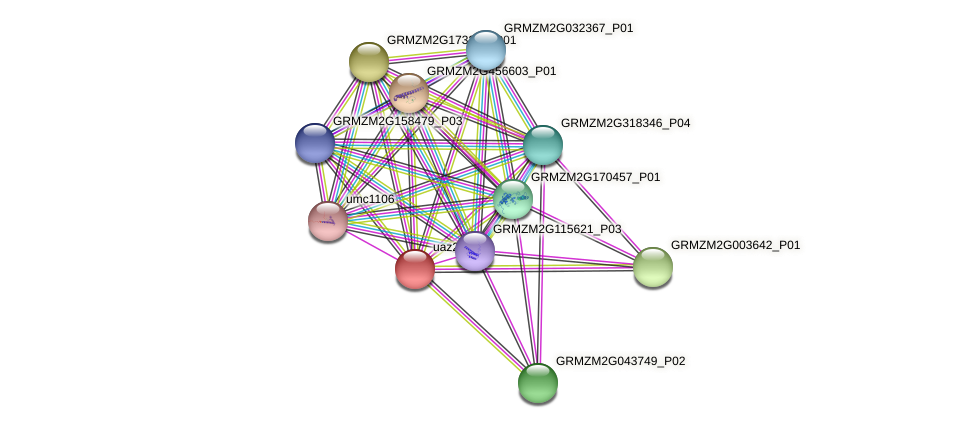 GRMZM2G024823_P01 protein (Zea mays) - STRING interaction network