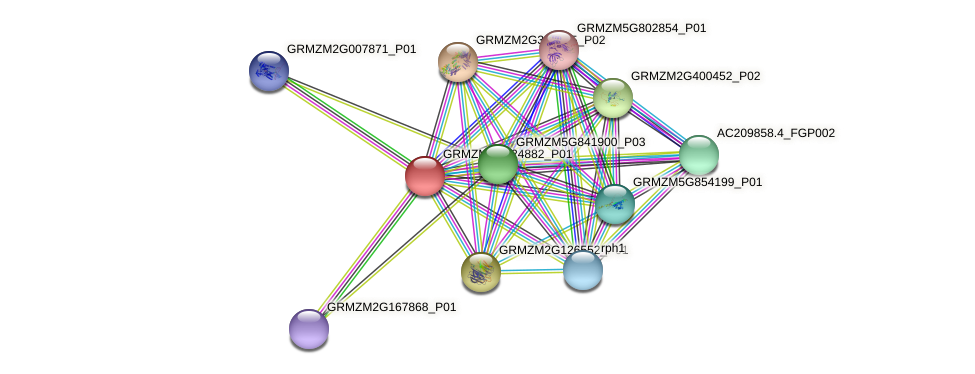 GRMZM2G024882_P01 protein (Zea mays) - STRING interaction network