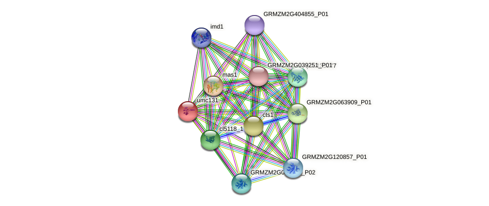 umc131 protein (Zea mays) - STRING interaction network