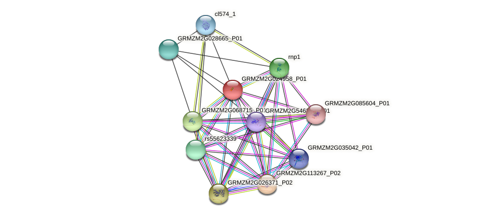 GRMZM2G024958_P01 protein (Zea mays) - STRING interaction network
