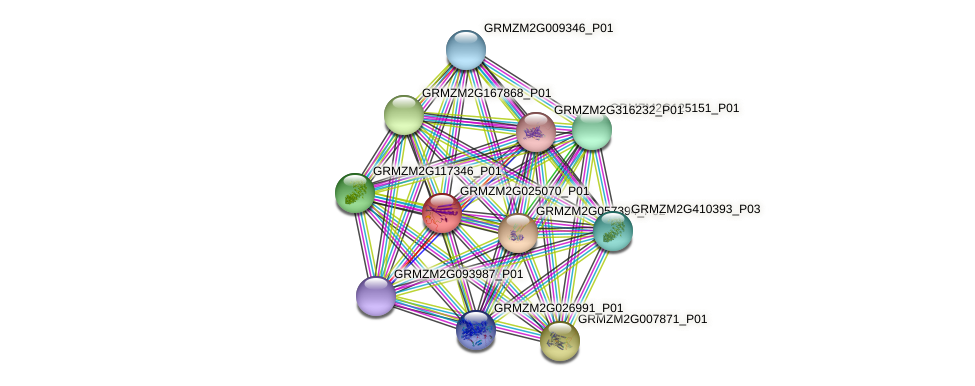GRMZM2G025070_P01 protein (Zea mays) - STRING interaction network