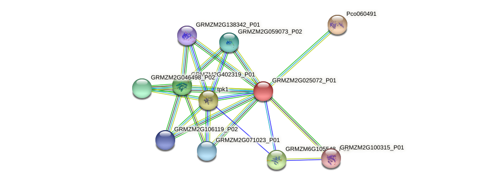 GRMZM2G025072_P01 protein (Zea mays) - STRING interaction network