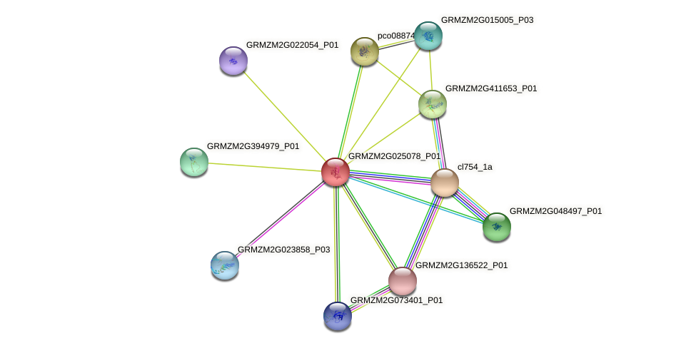 GRMZM2G025078_P01 protein (Zea mays) - STRING interaction network