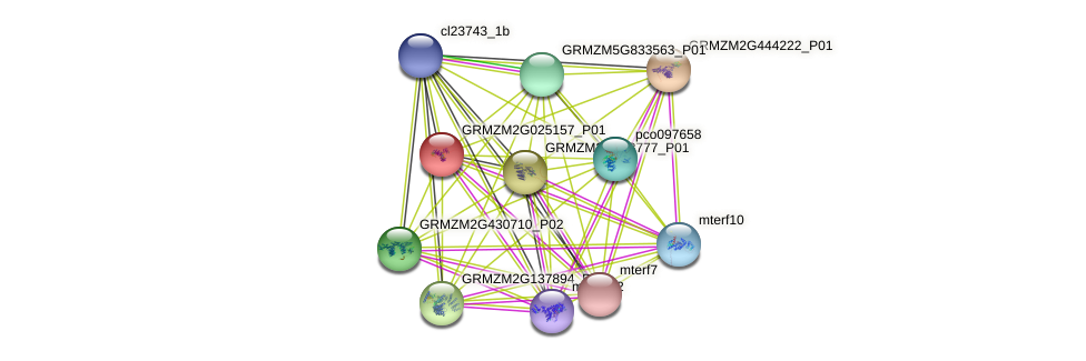 GRMZM2G025157_P01 protein (Zea mays) - STRING interaction network