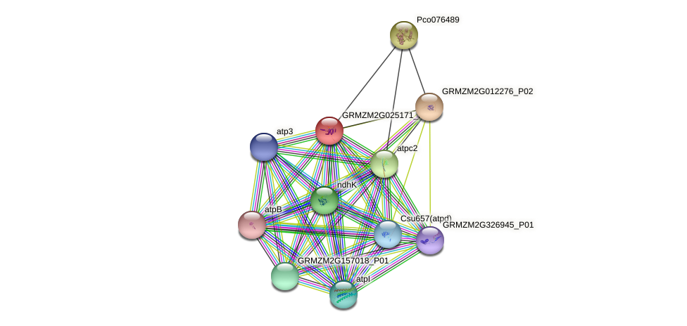 GRMZM2G025171_P01 protein (Zea mays) - STRING interaction network
