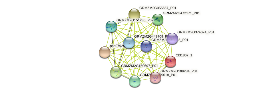 cl31807_1 protein (Zea mays) - STRING interaction network