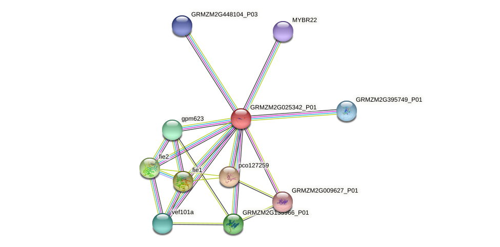 GRMZM2G025342_P01 protein (Zea mays) - STRING interaction network