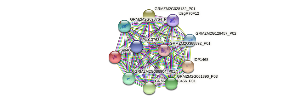 GRMZM2G025356_P01 protein (Zea mays) - STRING interaction network